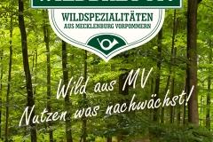 Wildbret Mv